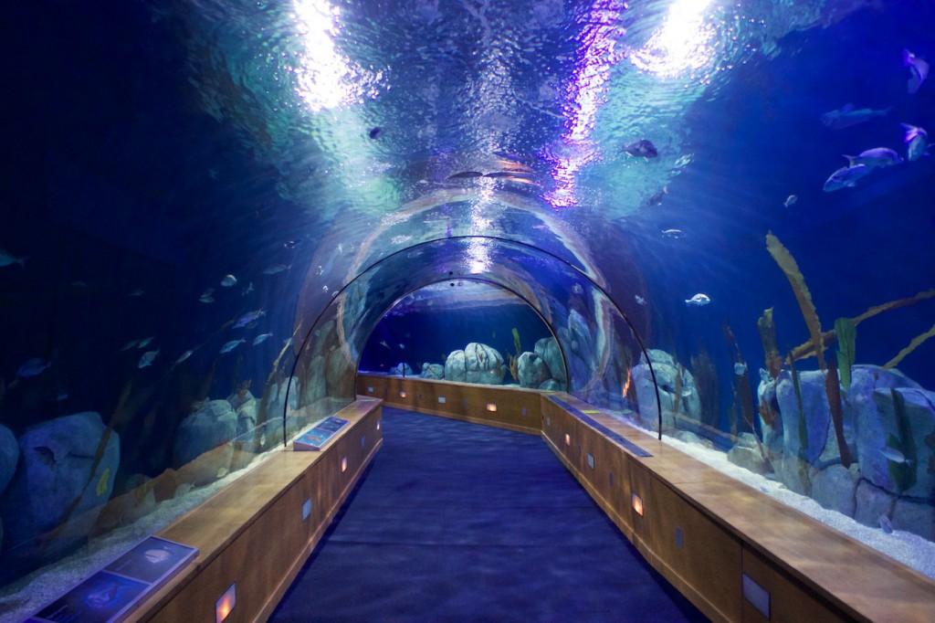 Unterwassertunnel im Oceanogràfic