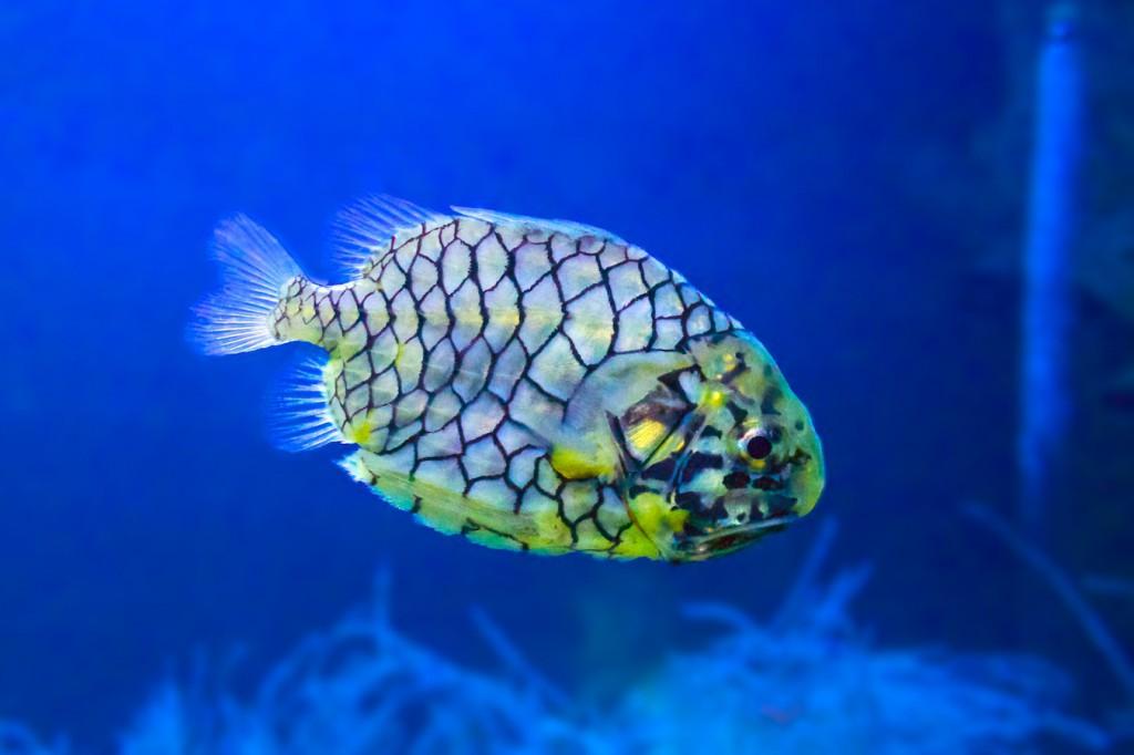 Fisch im L'Oceanogràfic