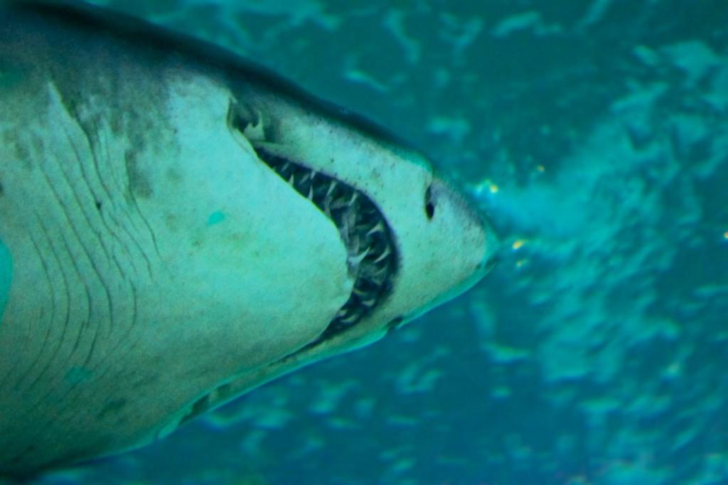 Und der Haifisch, der hat Zähne…
